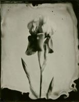 ambrotype 008 by charlesguerin