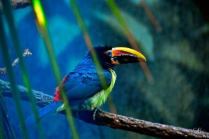 After the Rain - Green Aracari Toucan by Momenti-Photo