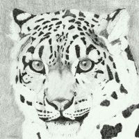 Snow leopard '2 by Sollerion