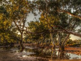 Gum Tree Waterhole by rockhenge