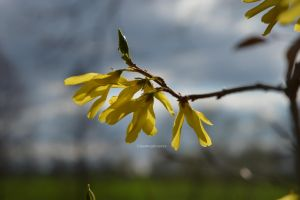 signs of spring by XnaturepicturesX