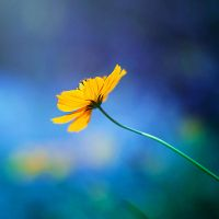 Reach for the light by arefin03