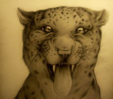 snow leopard drawing by Honeycorn