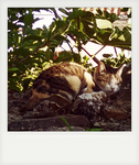 sleeping cat by rioMenor