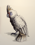 Ink Drawing - Bare-Eyed Cockatoo by Royal-Serpent