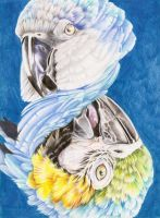 Endangered Series Macaws by LyrebirdJacki