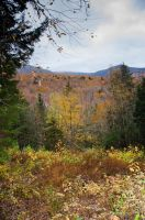 White Mountains  Fall Foliage  108 by FairieGoodMother