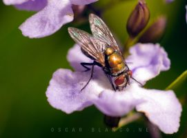 Fly pollinating flower 01 by otas32