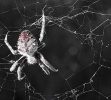 Spider With Web by Kintall