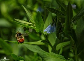The Bee and the Blue Bell Flowers by mjohanson