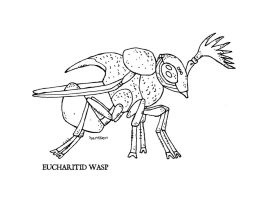 Eucharitid Wasp by Hartter