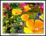 Spring Flowers For Mandy by KLR620