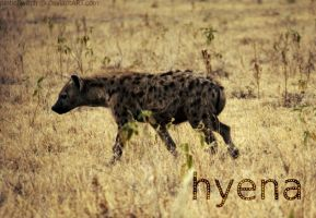 Hyena by pinballwitch