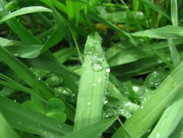 Droplets on grass 5356 by Maxine190889