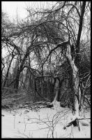 The Final Snow by PinEyedGirl