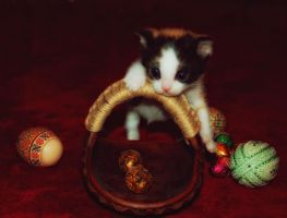 Easter Cat by josephine26
