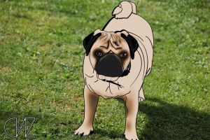 Pug Photo by Lewiscdl