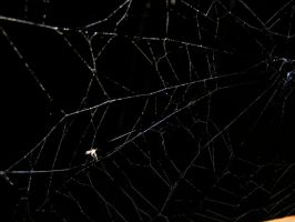 Spiderweb 02 by Limited-Vision-Stock