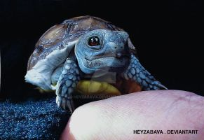Real Life Pokemon - Squirtle by HeyZabava