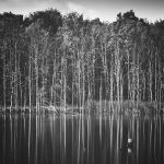 Water wood by RafalBigda