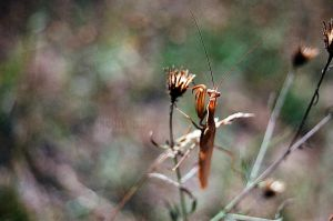 Mantid by MaddLouise