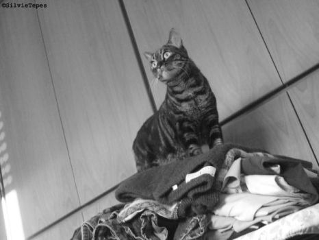 On the -clothes- mountain. by SilvieTepes