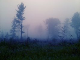 Foggy Morning by nelsonpray