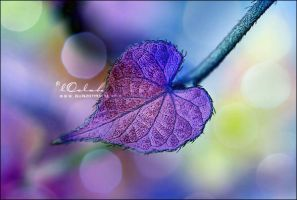 Pure Purple by lOolah