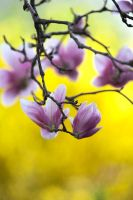 Spring Blossom 5 by Art-Photo