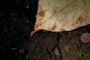 leaf 1 by seafoodmwg