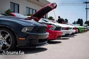 Line of Roush Mustangs by breanna-rae