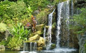 Waterfall at the Arboretum by Fritters