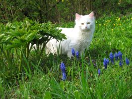Cats' Garden by Ange-d-etre