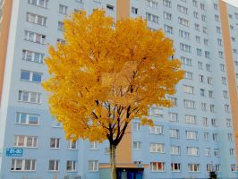 Fall en Tree by Nebrija