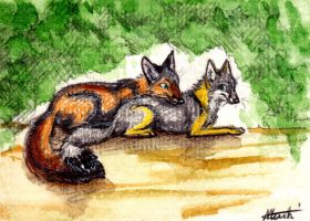 ACEO : Oh Happy Day by Nanook94