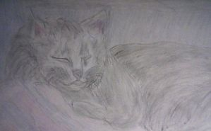 My Cat Lounging by MARLY272000