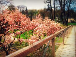 spring picture..in autumn by demran