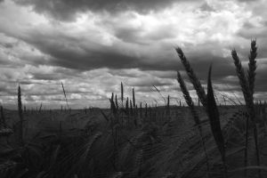 Wind, clouds and barley by Criosdan