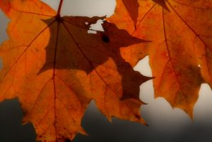 Leaves.. by ToxicChick