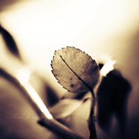 Remembering... by onixa