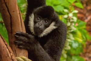 Spider Monkey by daniellepowell82