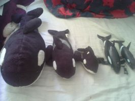 My orca Collection by cargirl9