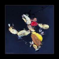 Autumn floats by by George---Kirk