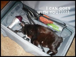 lolcat - i can come too??.. by baby-snakes