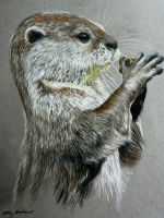 River Otter by ChalkyCanvas
