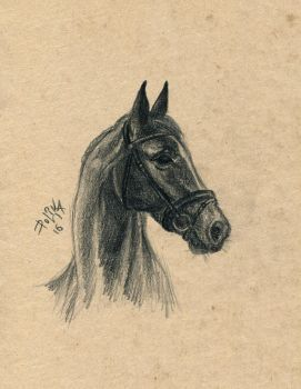 Horse by polinaart1
