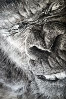 Gorilla drawing A4 charcoal by Helsartpage