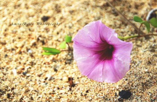 The Flowery Sand by AnitaBella