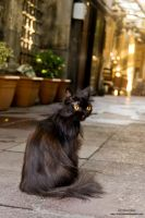 istanbul Cats 2 by MuratGezer