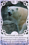 Animal Spirits - Polar Bear by Cwen-Natulcien